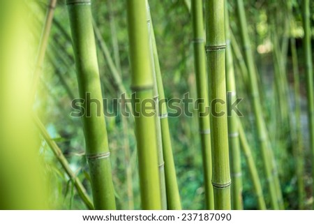 part of Fresh bamboo in bamboo forest background - stock photo