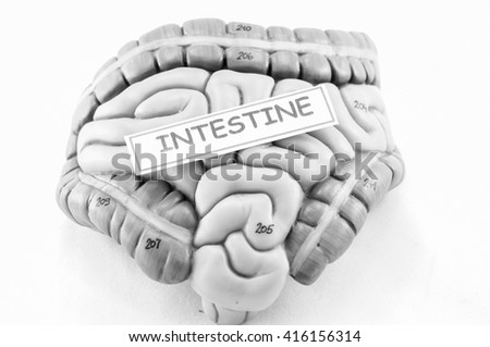 part of gastrointestinal with black and white color style - stock photo
