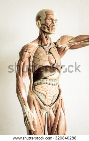 part of human body model with old style - stock photo