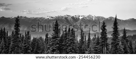 Part of Olympic National Park the sun begins to hit Hurricane Ridge - stock photo