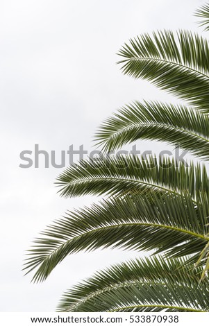 Part of palm tree branch on white background.