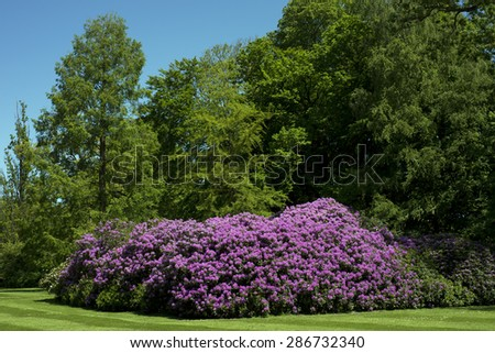 Part of park with big rhododendron and green trees sky blue - stock photo