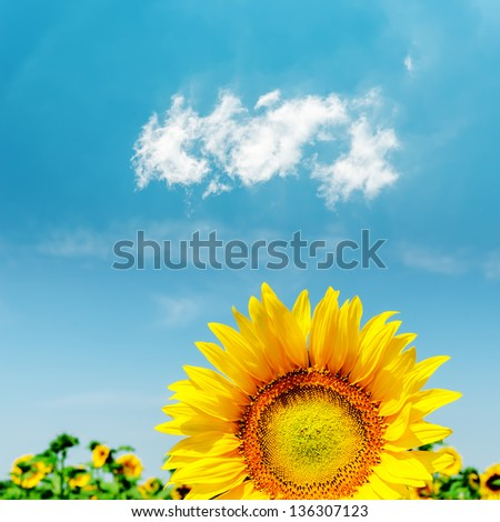 part of sunflower closeup and blue sky with clouds