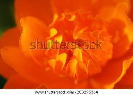 Part of the orange flower. Macro.                                - stock photo