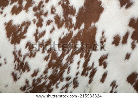 part of the pattern on hide of red and white cow