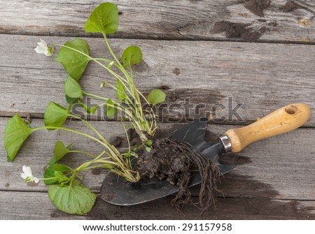Part of the plants on the forest violet wooden table next to a garden shovel