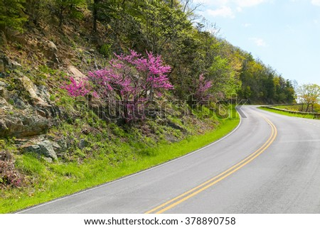 Part of the Skyline Drive in Virginia with bends and a blooming bush by the wayside. - stock photo