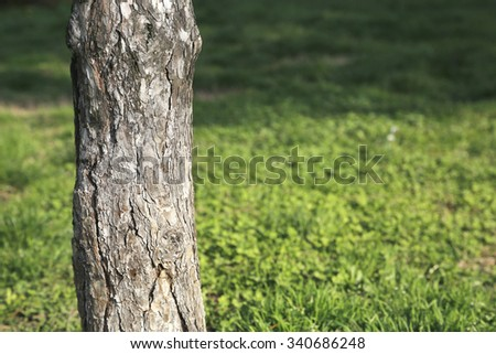 Part of tree on green field in woods