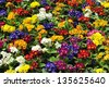 parterre garden with mixed groups of flowers of various colors - stock photo