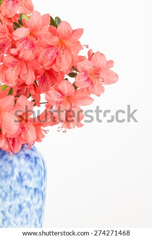 Partial view of spring glowering coral colored azalea  in a mottled blue and white vase with copy space. - stock photo