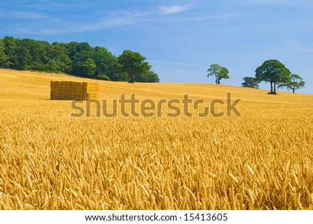 Partially harvested wheat field, rural Shropshire, UK - stock photo