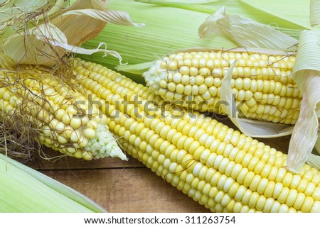 Partially revealed fresh yellow corn cobs stacked