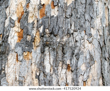 partially stripped tree bark for background or texture
