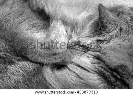 parts of cats body. cat fur texture