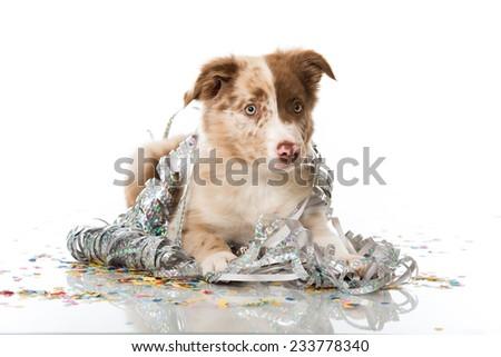 Party dog - stock photo