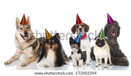Party dogs - stock photo