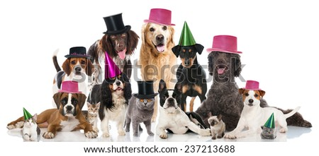 Party pets - stock photo