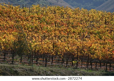 Paso Robles, California - stock photo