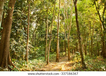 passageway through forest, eastern Thailand