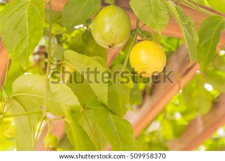 Passion fruit on wooden panel at home garden