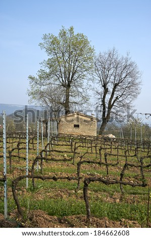 Passirano (Bs), Franciacorta,Italy, a vineyard at the end of March