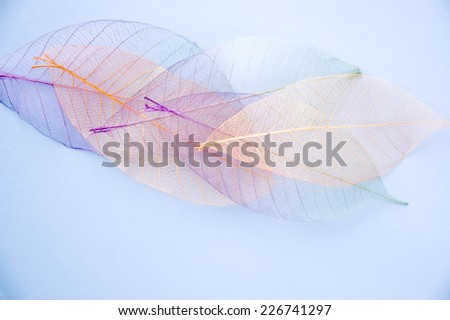 pastel color dried leaves on background