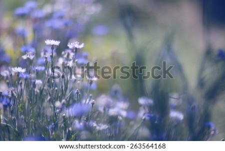 Pastel colored flowers. Soft focus, small depth of field photo