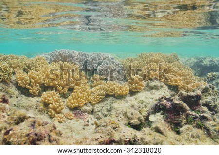 Pastel colored hard corals in shallow water of tropical southern Pacific ocean. - stock photo