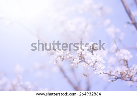 Pastel colored photo of tree flowers. Soft focus - stock photo