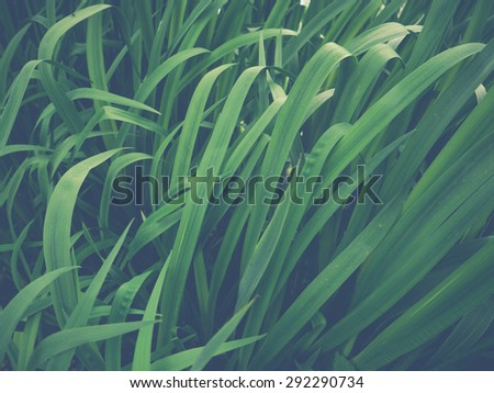 Pastel Filter Image Of Tall Wetland Grass - stock photo