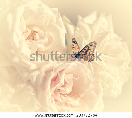 pastel roses with butterfly to holiday with cream filter - stock photo