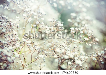 Pastel toned flowers - stock photo