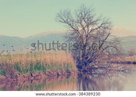 Pastoral spring landscape of Hula lake reserve and migrating cranes. Snow-covered top of the Hermon mountain in the background. North of Israel.  Vintage style photo - stock photo