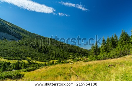 Pastoral summer  scenery in the mountains, with fir tree forests - stock photo