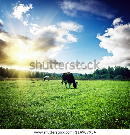 Pasture and clouds. Summer morning shot - stock photo