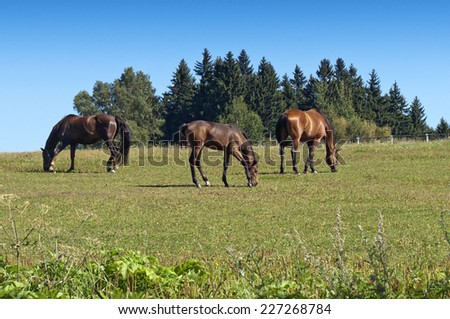 Pasture and grazing horses on a sunny day