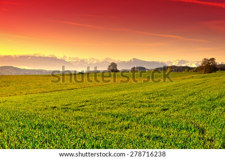 Pasture on the Background of Snow-capped Alps in Switzerland at Sunset - stock photo