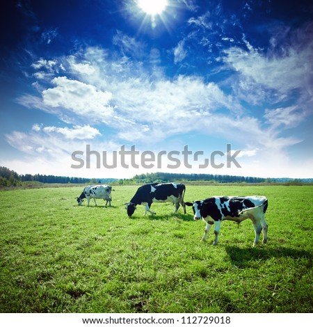Pasture. Summer day landscape - stock photo