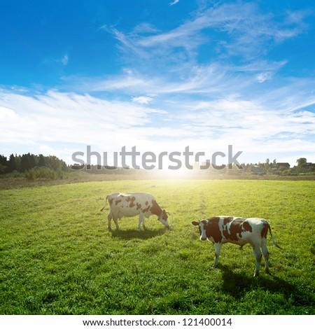 Pasture. Summer rural morning shot - stock photo