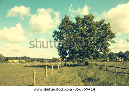 Pastures and solitary Oak Tree - stock photo