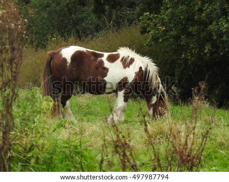Patchy Horse