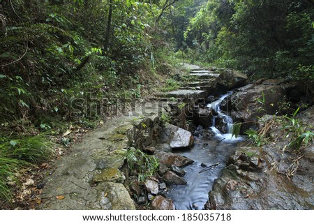 path along brook in Tropical Rainforest - stock photo