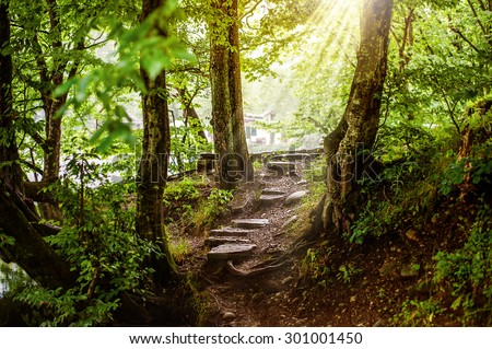 path and steps from stones in the beautiful magic forest and sun rays through branches - stock photo