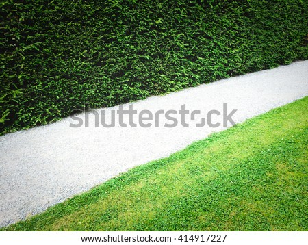 Path between green hedge and grass lawn.
