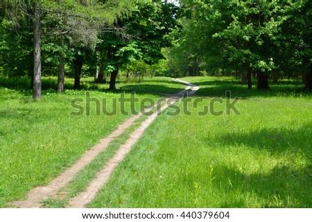 path between green trees - stock photo