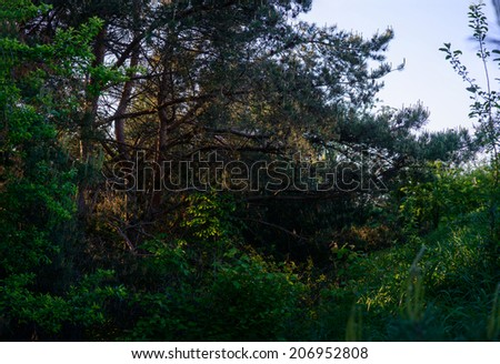 Path between trees in  forest  - stock photo