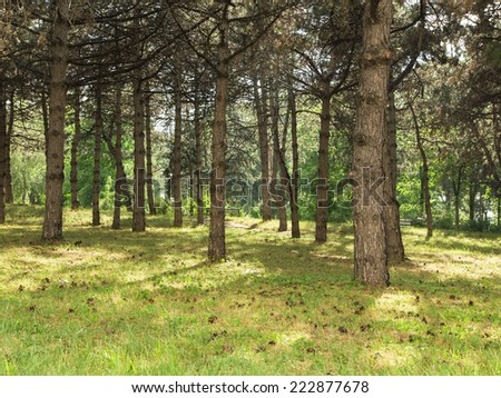 Path by early summer forest isolated in the closeup - stock photo