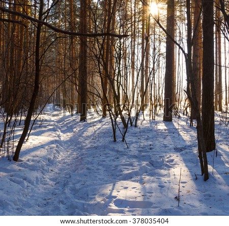 path forest trees bright sunny day in winter - stock photo