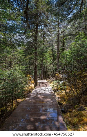 Path heading to deep tropical rainforest landscape concept