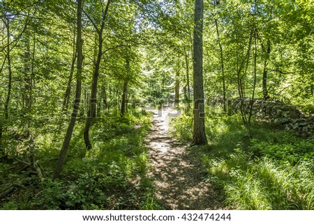 path in a beautiful green forest in summer